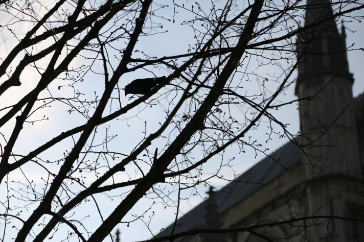 Silhouette of a blooming tree with a bird, with Winchester Cathedral in the background