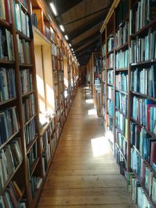 Sun dappled halls of a book shop