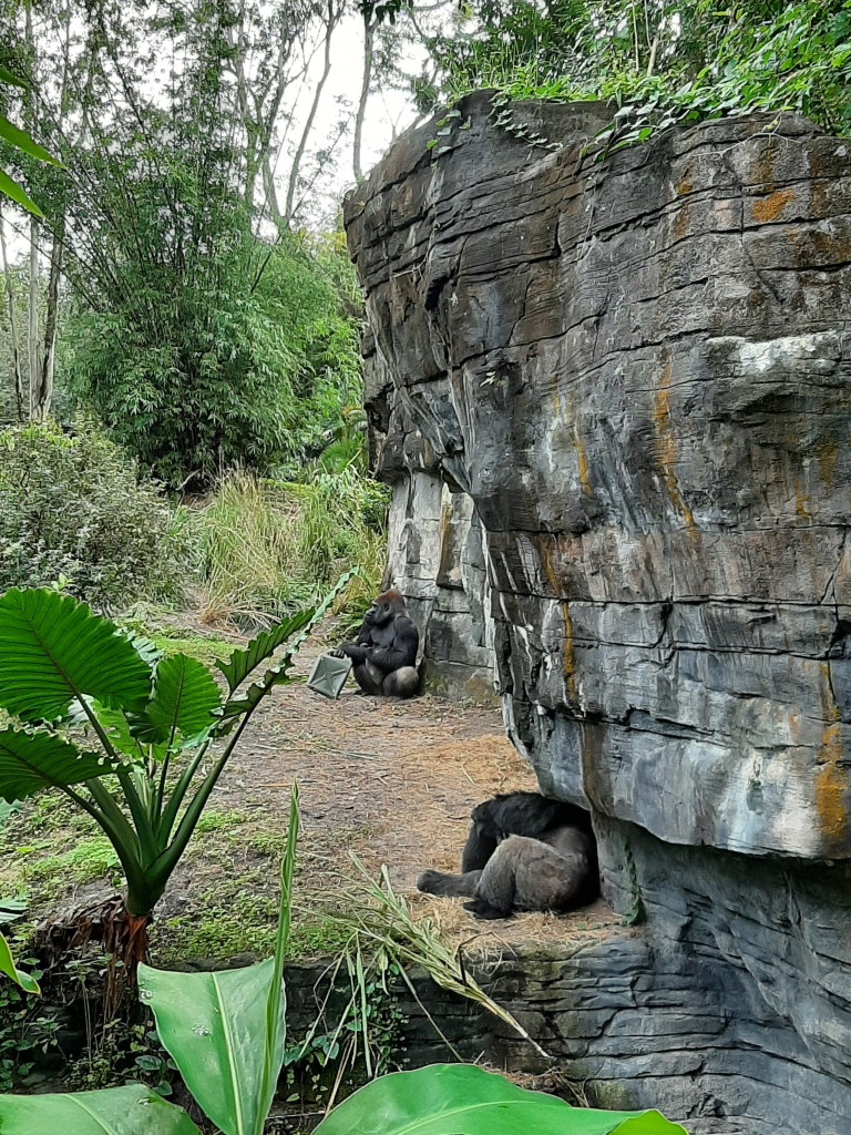 Two Gorillas against a stone and green flora habitat