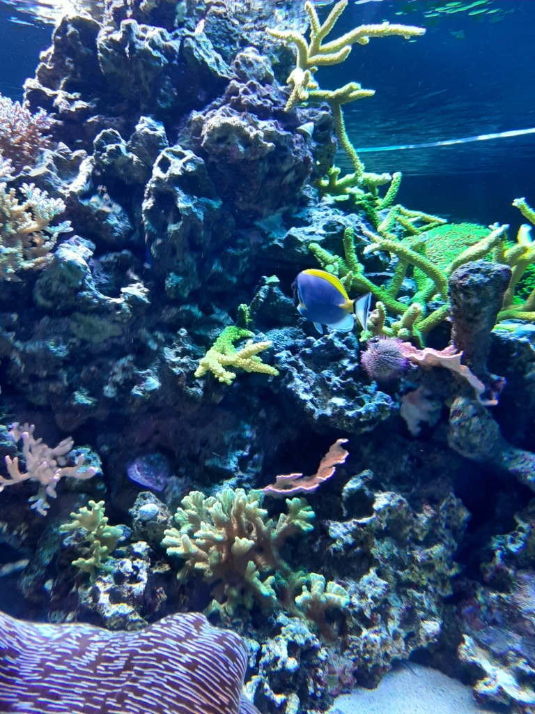 Coral reef in SeaBase Aquarium, EPCOT
