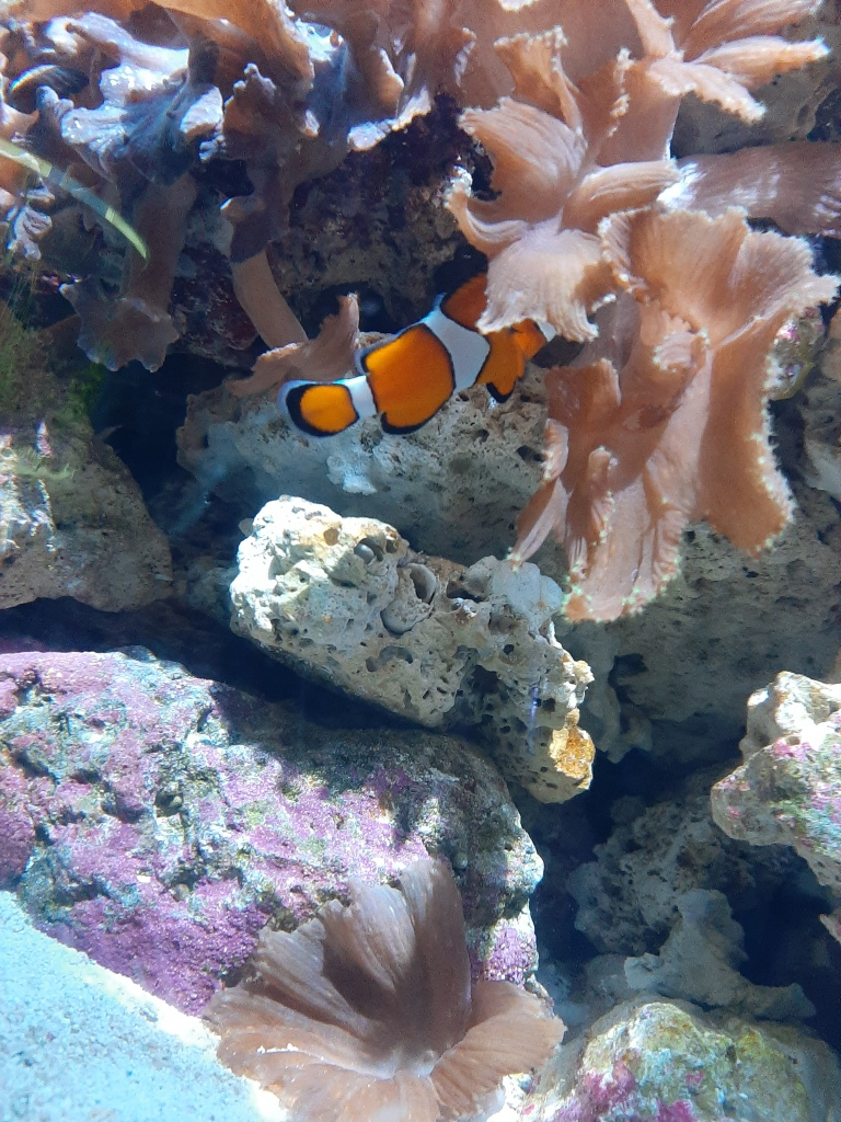 Coral reef and clown fish at SeaBase Aquarium, EPCOT