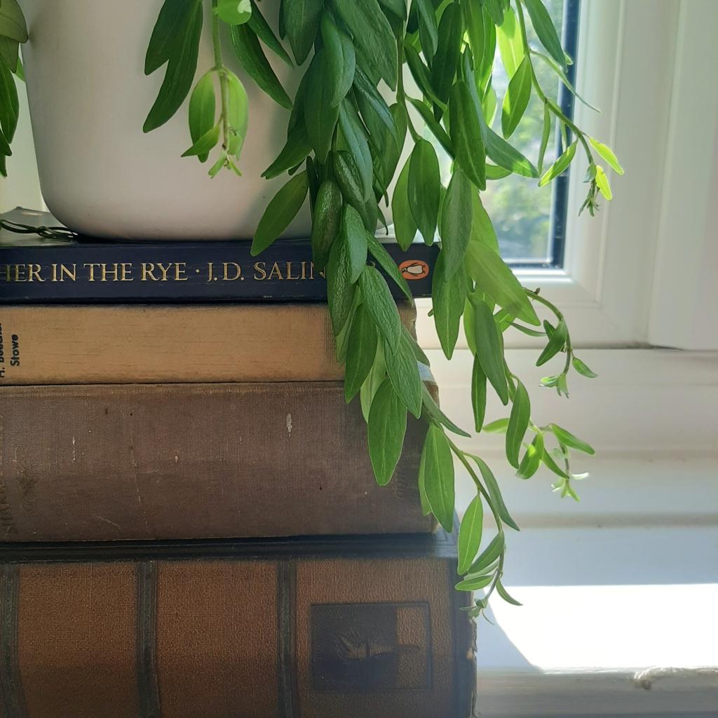 No hanging plant? No problem