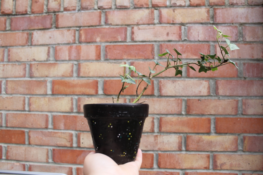 English Ivy in a black pot, against a red brick wall