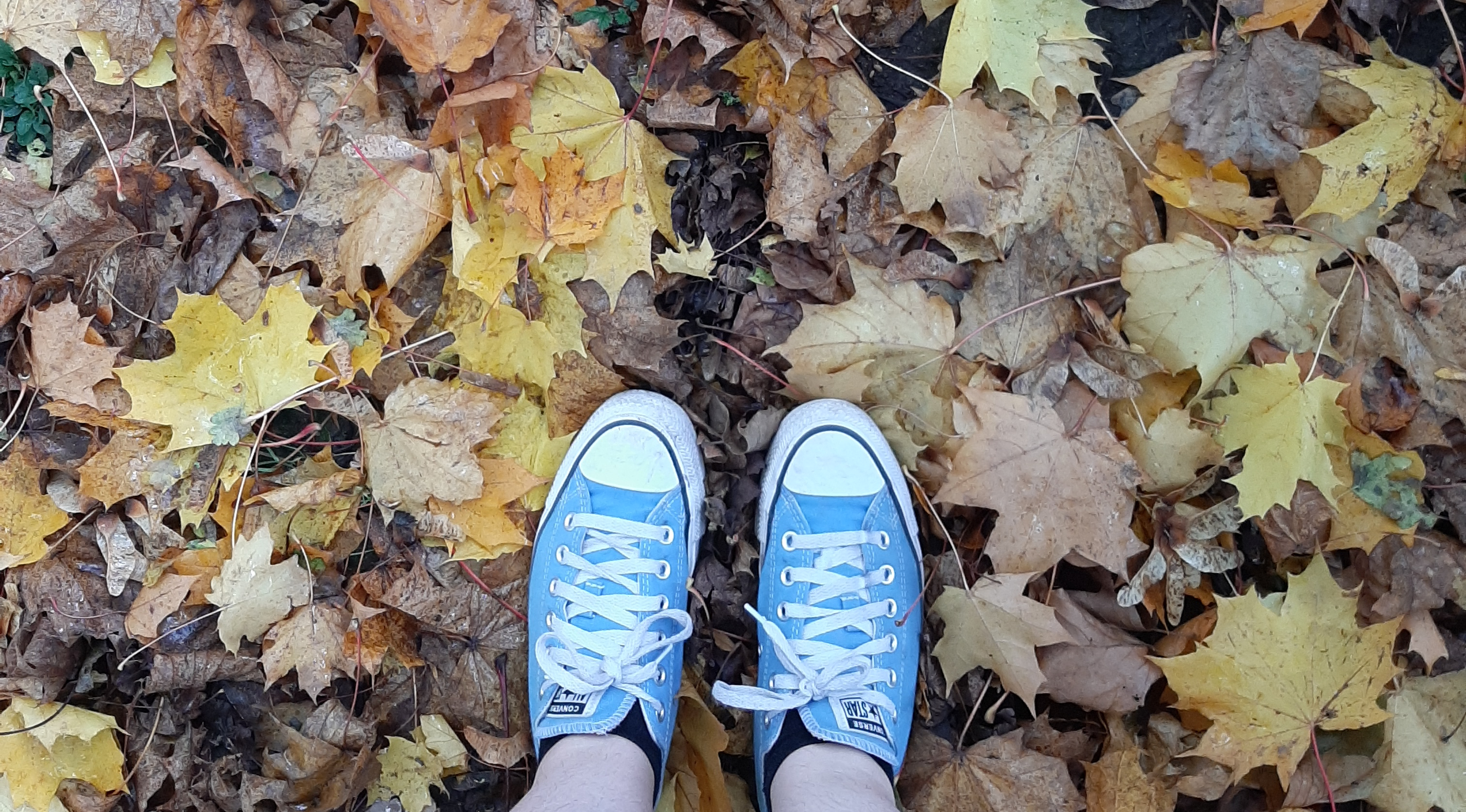 Leaves of yellow and brown on the floor. Light blue converse
