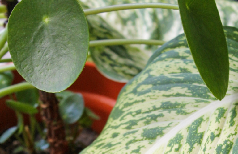 PLANT PARENTING 101: BEST PLANTS FOR BEGINNERS